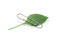 Paper clip with leaf Royalty Free Stock Images