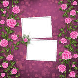 Paper for congratulation with painting rose Stock Photography