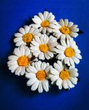 Paper Daisies royalty free stock images