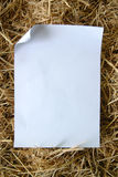 Paper on dry grass Stock Images