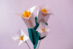 Paper flower. Or origami folded and shaped in Texas Bluebell, Tulip Gentian Royalty Free Stock Photography