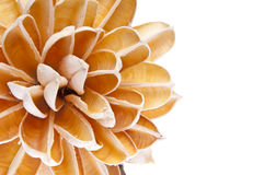 Paper Flower Border Royalty Free Stock Photography