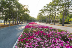 Paper flower and road stock photography