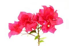 Paper flower Stock Image