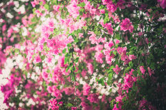Paper flowers or Bougainvillea vintage Royalty Free Stock Photography
