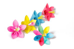 Paper flowers and flower with varicolored petals Royalty Free Stock Images