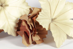 Paper flowers. Several decorative paper flowers of different forms and colors (brown and cream), isolated on white background Royalty Free Stock Images