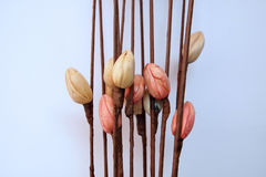 paper foto för härliga blommor mycket Fotografering för Bildbyråer