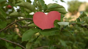 Paper heart falling from a branch. Paper heart falling down from a branch of an apple tree in a summer garden. Shot from hands. Valentines day stock video