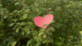 Paper heart falling from a bush. Paper heart falling down from a cherry bush in a summer garden. Shot from hands. Valentines day stock footage