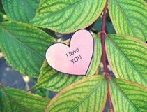 Paper heart I Love You on the green leaf Royalty Free Stock Photo