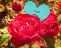 Paper heart I Love You on the red rose Royalty Free Stock Image