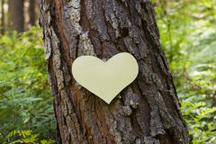 Paper heart on a tree Royalty Free Stock Photography