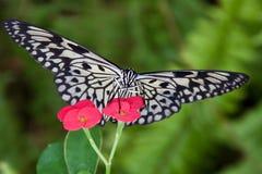 Paper Kite Royalty Free Stock Image