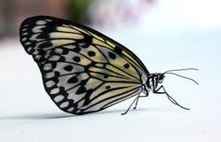 Paper Kite. Royalty Free Stock Photos