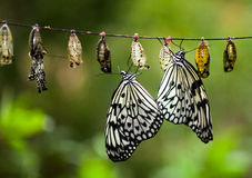Paper Kite Butterflies Royalty Free Stock Images