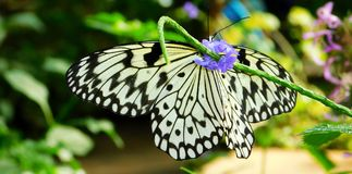 Paper Kite Butterfly Stock Image
