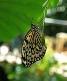 Paper kite butterfly at Callaway Gardens Royalty Free Stock Photos