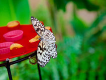 Paper kite butterfly feeding Stock Photos