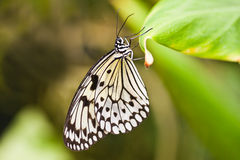 Paper kite butterfly hanging on leaf Royalty Free Stock Image
