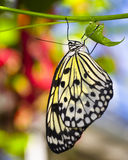 Paper Kite Butterfly Royalty Free Stock Photography