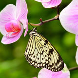 Paper kite butterfly Stock Photography