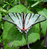 Paper Kite Butterfly royalty free stock images