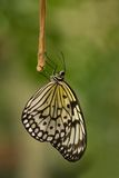 Paper kite butterfly resting for the night Royalty Free Stock Photo
