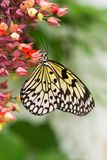 Paper kite butterfly - vertical image Stock Image