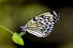 Paper Kite.Malaysia. Royalty Free Stock Photos