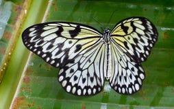 Paper Kite.Malaysia. (9) Stock Image