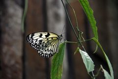 Bright transparent butterfly royalty free stock image