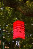 Paper lamp in a tree Stock Photos