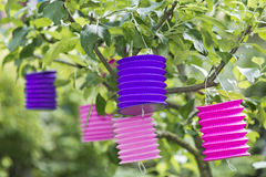 Paper lantern in a tree Royalty Free Stock Images