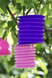 Paper lantern in a tree Stock Photos
