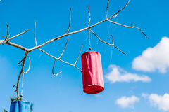 Paper Lanterns on tree branch. Royalty Free Stock Photography