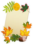 Paper leaf. Autumn leaves and summer mountain ash, oak, maple, poplar and paper Stock Photo
