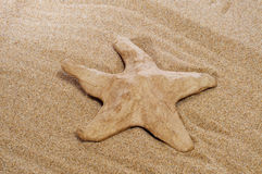 Paper-mache seastar on the sand Royalty Free Stock Image