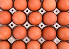 paper magasin för ägg Royaltyfri Bild