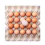paper magasin för ägg Royaltyfri Fotografi