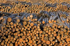 Tree Trunks Wood Logs Piled Outside Paper MIll royalty free stock images