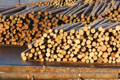 Paper Mill 2 Logs Waiting For Lumber Processing Royalty Free Stock Photos