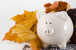 Paper Money and a Piggy Bank in the fall. A white piggy bank, isolated on white background with paper money. Concept of energy savings in fall, back to school Stock Images