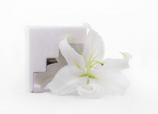 Paper napkins & lily. Holder White paper napkins & flower lily Royalty Free Stock Images