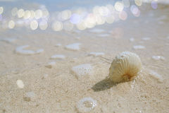 Paper nautilus shell  with  glitter  sea wave on a beach. Shallow dof Stock Images