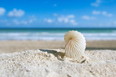 Paper nautilus shell  with ocean , beach and seascape Stock Photos