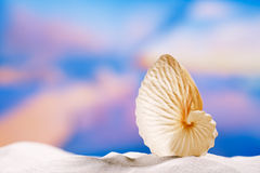 Paper nautilus shell  on white  beach sand and blue seascape bac Royalty Free Stock Photo