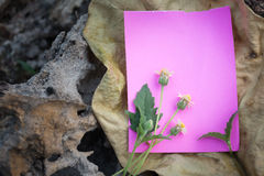 Paper note on dry wood Royalty Free Stock Photos