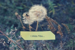 Paper note I Miss You, white dandelions and dry autumn grass royalty free stock image