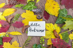 Paper note  surround by leafs with hello autumn sign Royalty Free Stock Images